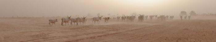 Пустынный пейзаж Сенегала