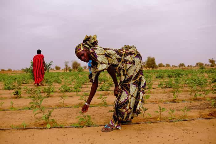 Женщина в деревне Койли Альфа в центре Сенегала показывает посетителю некоторые из молодых растений, прорастающих в саду, засаженном Великой зеленой стеной. Фотография: Джилл Филипович для Хранителя