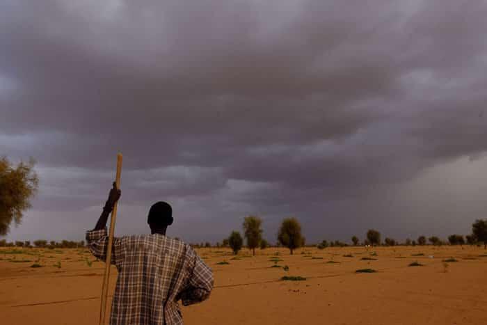 Великая зеленая стена. Сенегал. В ожидании дождя