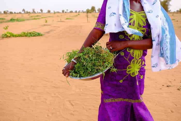 Сенегал. Великая зеленая стена