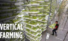 В Нью-Джерси строят крупнейшую в мире экологичную ферму