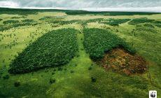 Причины вырубки лесов на планете